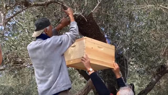 דבורים – מדוע הן נעלמות?