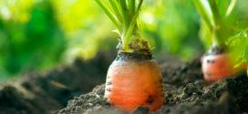 החקלאות הביודינמית – שאלות ותשובות