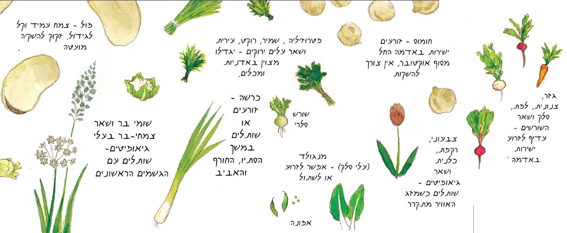 זרעי חורף