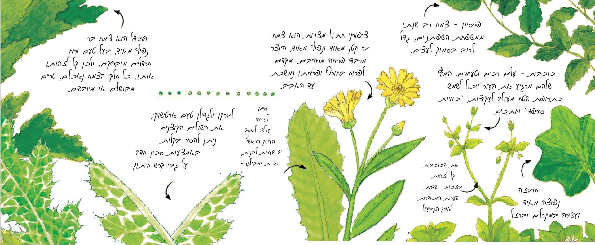 צמחי בר בגינה