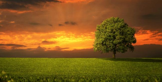 מדיטאציה כדו-שיח עם עולם הרוח [איגרת 231]