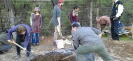 מכים שורשים: דיווח מכנס החורף של החקלאות הביודינמית בישראל [איגרת 242]