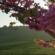 חוק הליקוט הראשון  או – למה לאביב קוראים אביב? [איגרת 249]