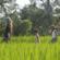 מה שבאלי: על חינוך חופשי שנולד מתוך מחסור במסגרות באינדונזיה [איגרת 246]