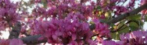 אביב. צילום: פאולינה לוהר (Pauline Löhr)
