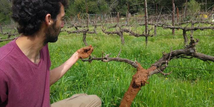 גדל באופן אורגני: מה חדש בחקלאות הביודינמית בישראל? [איגרת 194]