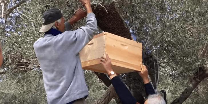 """אל תרססו את הדבורים! על יוזמת """"מגן דבורים אדום"""" [איגרת 196]"""