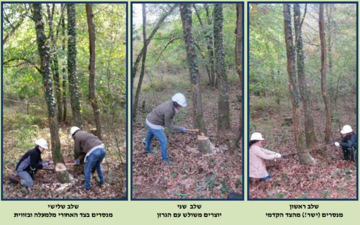 שיעור כריתת עצים בצרפת (מתוך החוברת)