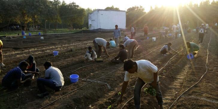 חקלאות ביודינמית בהודו – סיפור מסע בתמונות [איגרת 186]