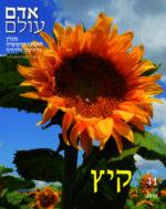 שער גליון 41 בנושא קיץ