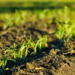 חקלאות ביודינמית