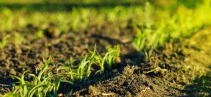 על הדומה והמשלים בין חקלאות ביודינמית, אורגנית ופרמקלצ'ר
