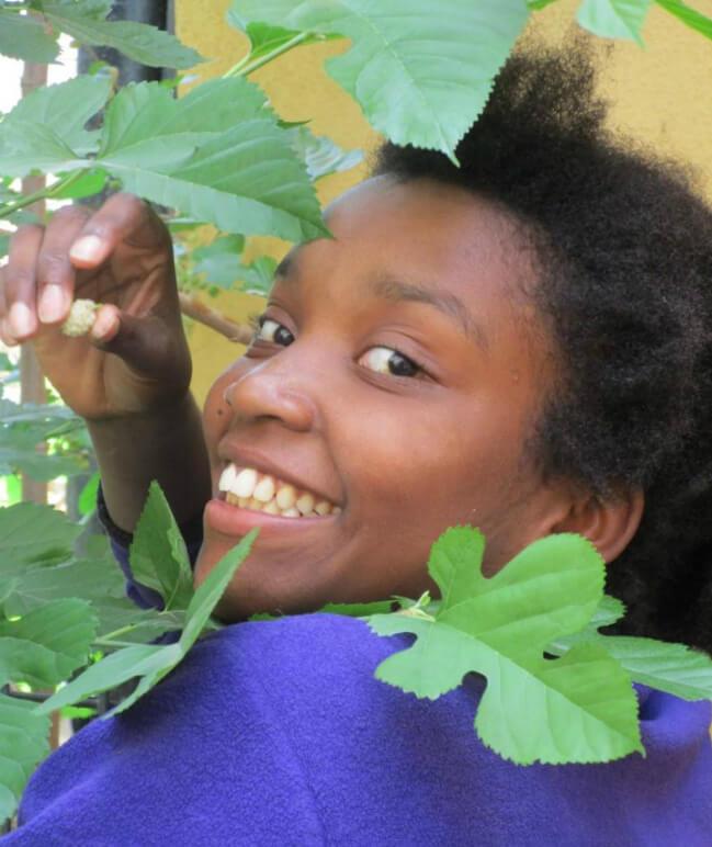 תלמידה מכיתה ו בעת קטיף תות עץ במשתלה החינוכית בבית ספר שקד