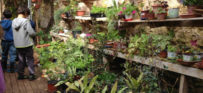 מה אפשר ללמוד מצמחים: על משתלה חינוכית בבית ספר שקד