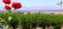 פתיחה לעולם: רשמים מסיורים ביודינמיים באגן הים התיכון