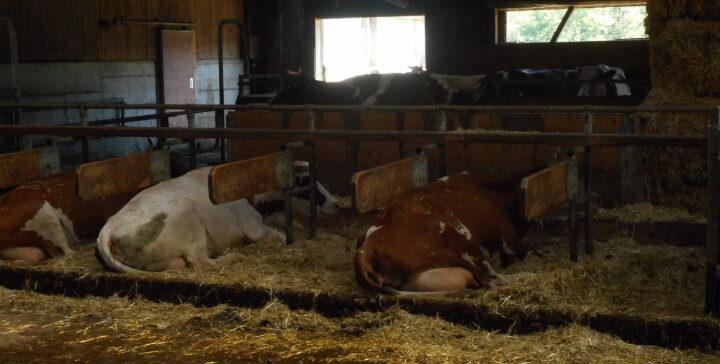 מיטה לכל פרה: רשמים מכנס המחקרים הביודינמיים בשוויץ