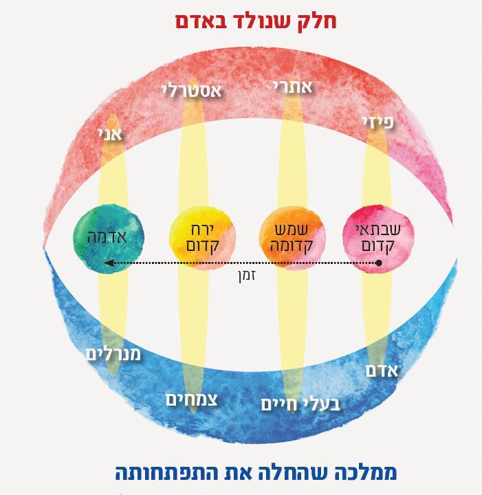 סכמת התפתחות של ארבע פעימות ההתפתחות