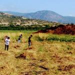 נערות ונערים עובדים בשדה חוות קיימא