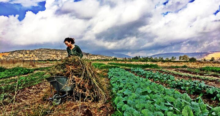 """נערה עובדת בשדה חוות """"קיימא"""""""