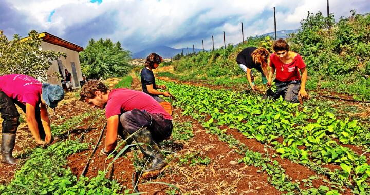 נערים ונערות עובדים בשדה החקלאי של חוות קיימא