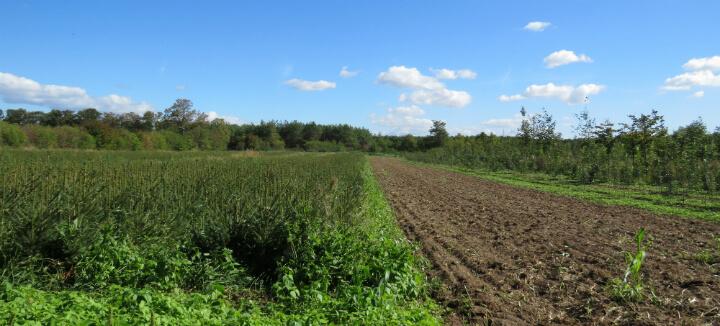 שדה חקלאי בגרמניה