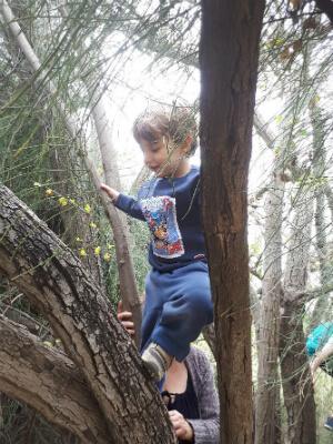 ילד מטפס על עץ