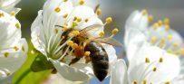 להיות דבורה לדבורים: אפליקציה חדשה להקמת גינות צופניות