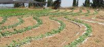 פרק 9: חקלאות ביודינמית, חלק ב'
