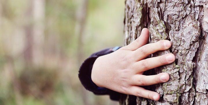 שיעורים שלמדתי על החיים – מהעצים