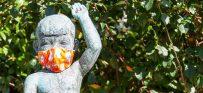 מגפת הקורונה: מחקר מיוחד מאת פרופ' הארי סלמאן